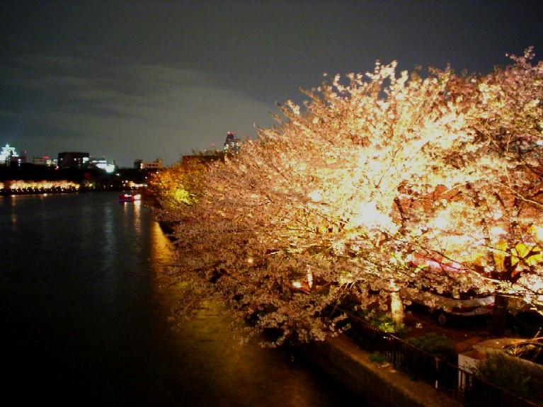大阪の桜の名所の造幣局の桜の通り抜け