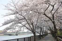 大阪の桜の名所は毛馬公園