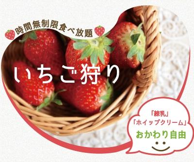 大阪のいちご狩りのお勧めスポットは岸和田観光農園