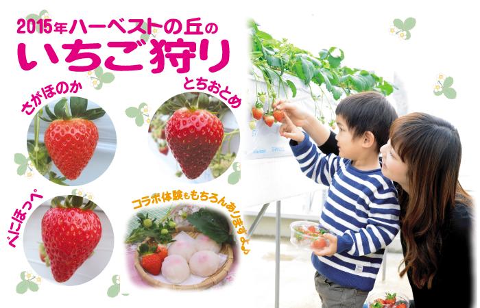 イチゴ狩りの大阪のお勧めスポットはハーベストの丘