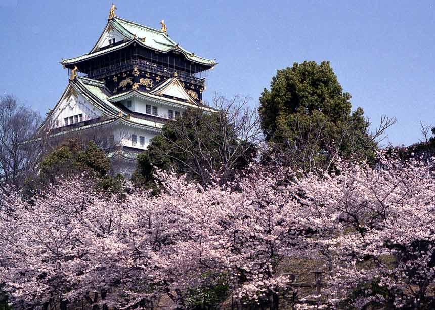大阪の桜の名所は大阪城公園
