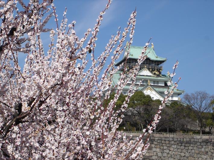 大阪城の梅を見るスポット