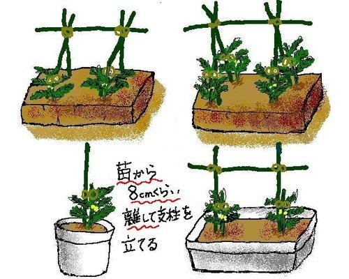 トマトの育て方のポイントやプランターの選び方