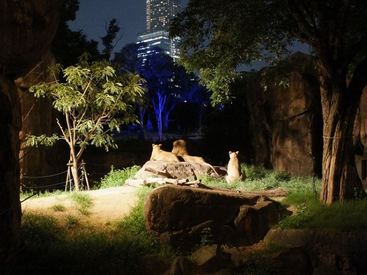 天王寺動物園のナイトズーの料金